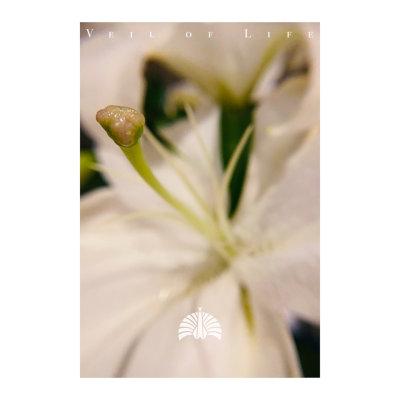 [Single] 東京事変 (Tokyo Jihen) – 命の帳 [FLAC + MP3 320 / WEB]