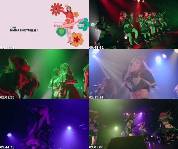 [TV-Variety] Migma Shelter – Tamane Birthday Rave – HALLUCINORANGE vol.2 (2021.04.04)