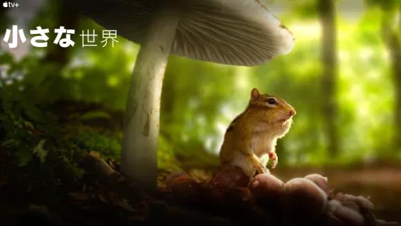 [ドラマ] 小さな世界 第1シーズン 全6話 UHD 4K (2021) (WEBRIP)