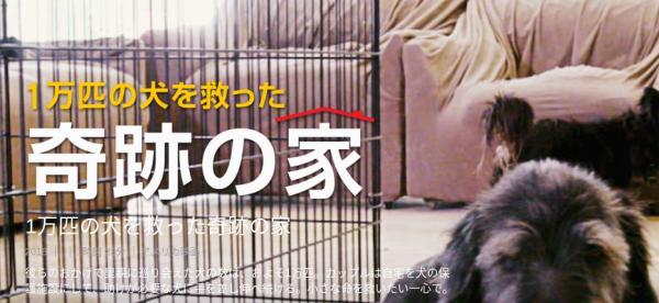 [MOVIES] 1万匹の犬を救った奇跡の家 (2020) (WEBRIP)